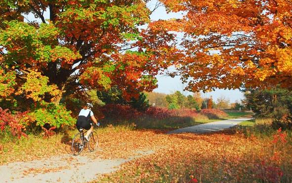 Michigan Fall Color