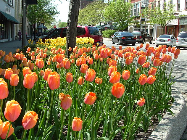 Holland Michigan Tulip Fesitval