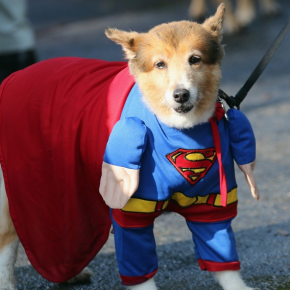 halloween-pet-contest