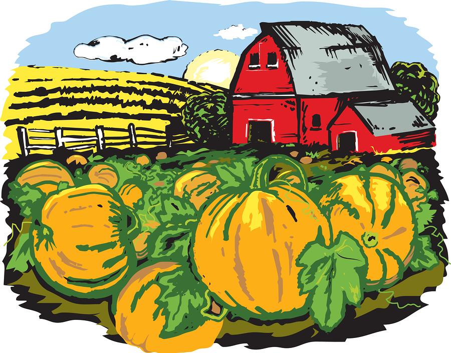bigstock Pumpkin Farm